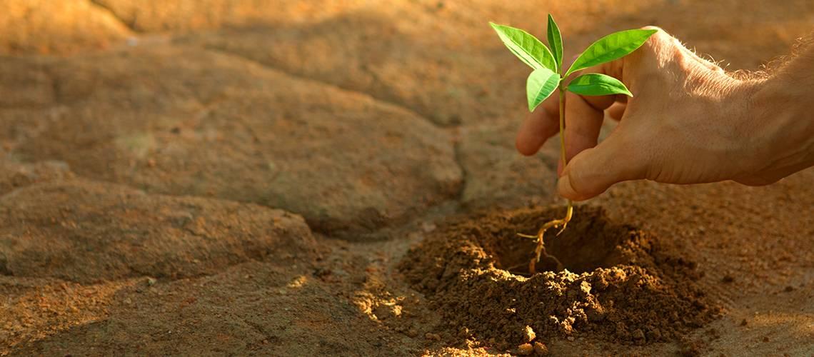Caring - Sharing - Investing - Growing